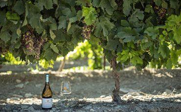 יין חדש יקב טפרברג